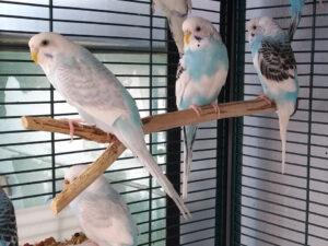 Live Birds for sale Rhinelander