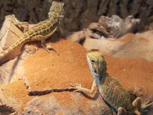Live Reptiles for sale Rhinelander