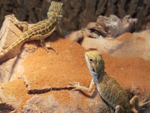Live Reptiles for sale Rhinelander