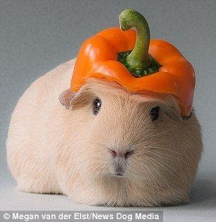 Read more about the article Trick or Wheek Cavy Cookies