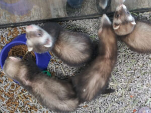 Small Pets for sale Rhinelander