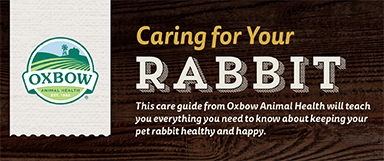 Oxbow Rabbit Care Guide