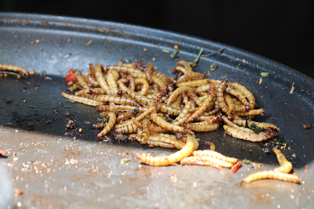 Read more about the article Mealworms, It's What's for Dinner