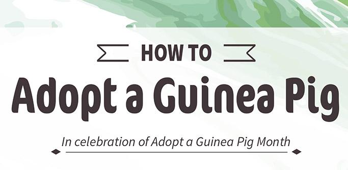 "Oxbow ""How to Adopt a Guinea Pig"" Guide"