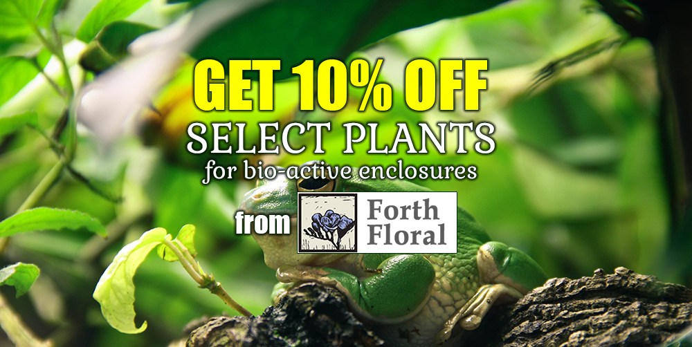Read more about the article SAVE 10% on Plants for your bio-active enclosure!