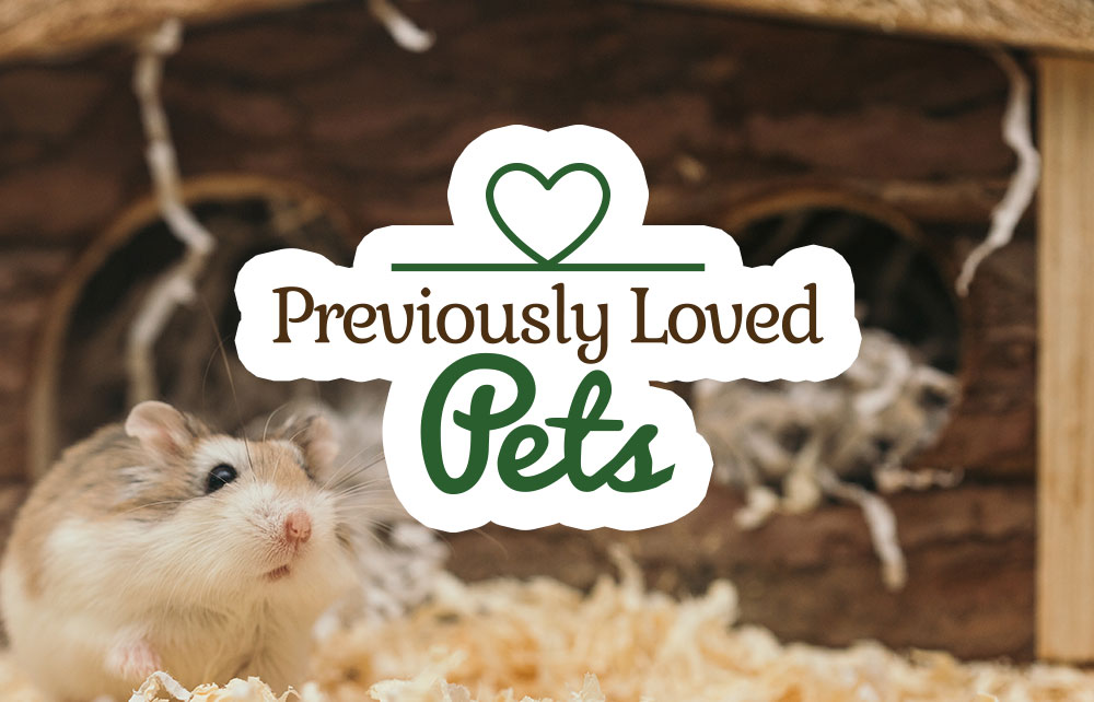 Read more about the article Previously Loved Pets – Animal Surrender Program
